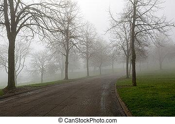 巻き取り, 道, 公園, 霧が濃い, 朝