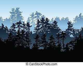 常緑樹, 森林