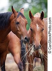 干し草, 食べること, 2, 馬