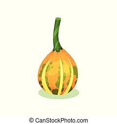 平ら, プロダクト, 自然, 健康, stem., ストライプ, 黄色, gourd., オレンジ, ベクトル, 緑, 小さい, カボチャ, ラウンド, アイコン