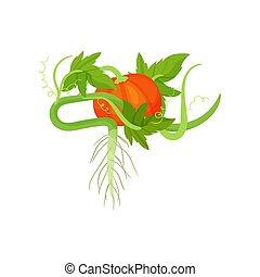 平ら, ベクトル, 有機体である, 健康, 葉, 明るい, 食品。, パッキング, 種, 緑, 耕される, オレンジ, roots., 要素, plant., カボチャ