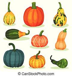 平ら, 別, セット, 自然, 熟した, 農場, product., plant., 食物, ベクトル, pumpkins., 農業, 有機体である, 健康