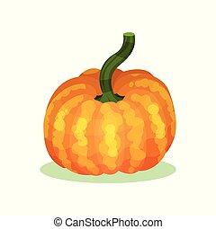 平ら, 有機体である, 健康, stem., orange-yellow, 大きい, 食物, ベクトル, 緑, crop., 農業, アイコン, カボチャ