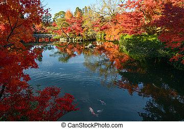 庭, カラフルである, fish, 木, 日本語, 秋, 反射, 池, かえで