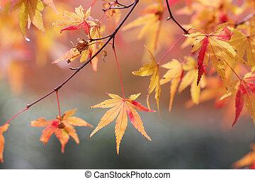 庭, 季節, 京都, 日本語, seiryuden, 秋