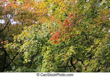 庭, 季節, tofukuji, 早く, 秋, 寺院
