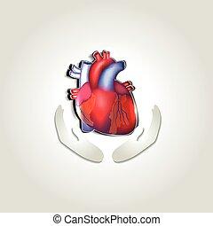 心, シンボル, 健康, 人間, 心配