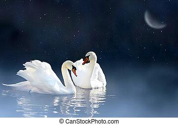 恋人, 白鳥