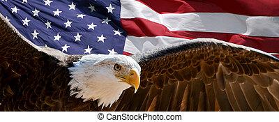 愛国心が強い, ワシ