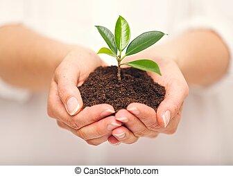 成長する, 土壌, 植物, ひと握り, 若い