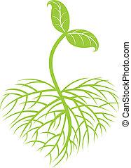 成長する, 植物
