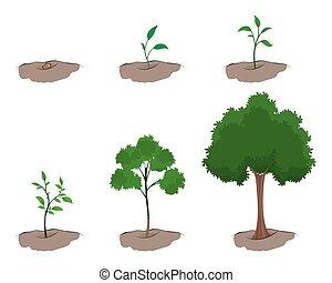成長, 木, ステージ