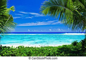 捨てられる, 木, 枠にはめられた, トロピカル, やし 浜
