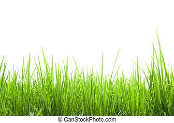 新たに, 白, 草, 緑, 隔離された
