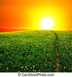 日の出, タンポポ, フィールド