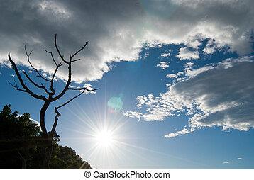 日光, 木, 雲, はげ