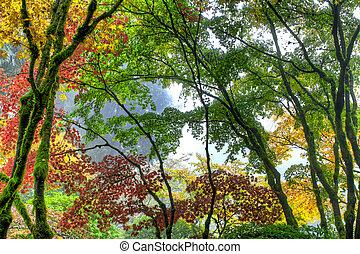 日本語, 木, 3, 秋, おおい, かえで