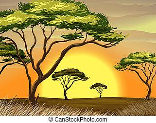 日没, 森林, 光景