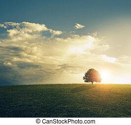 日没, field., 草が茂った