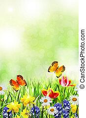 春の花, ラッパズイセン, チューリップ