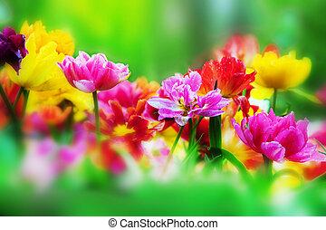 春の花, 庭, カラフルである
