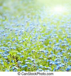 春の花, 日当たりが良い, 背景