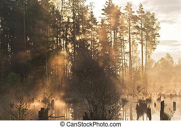 春, 太陽光線, 森