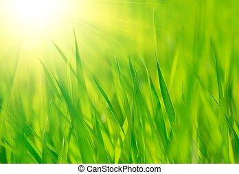 春, 明るい, 暖かい, 緑, 太陽, 新たに, 草