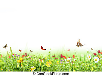 春, 白, 牧草地, 背景