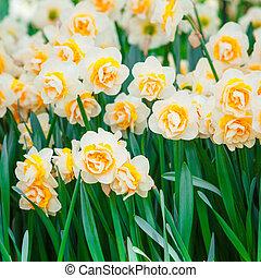 春, flowers., イースター, 背景