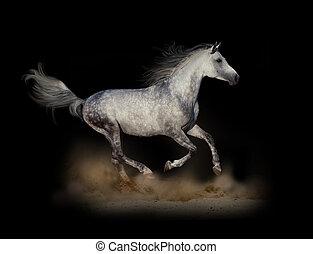 暗い, 操業, アラビア人, 種馬, 速い