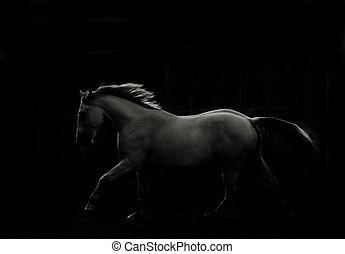 暗い, 白, 操業, 馬