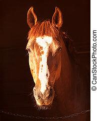 暗い, 肖像画, 馬, カタバミ