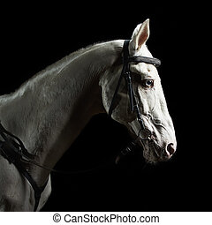 暗い, 肖像画, 馬, クローズアップ, 白