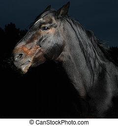 暗い, 肖像画, 馬, クローズアップ, 黒
