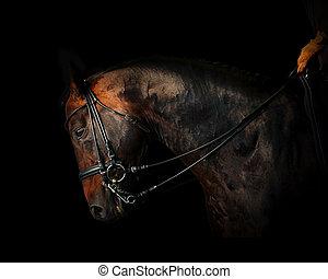 暗い, 馬の ライダー