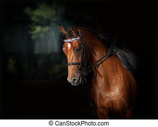 暗い, 馬, スポーツ, dressage, manege