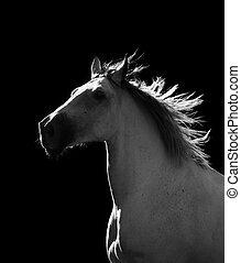 暗い, 馬, 引っ越し, 白