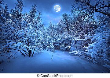 月光, 木, 冬, 夜