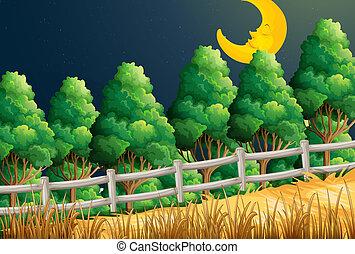 月, 光景, ジャングル, 睡眠