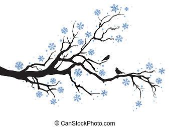 木の 冬, ブランチ