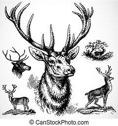 木びき台, ベクトル, 鹿