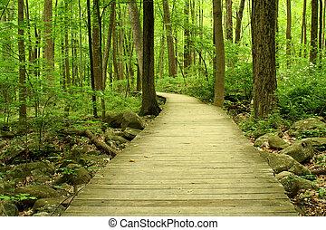 木製の橋, 森