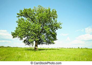 木, オーク, 古い, 緑, 牧草地