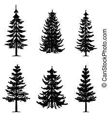 木, コレクション, 松