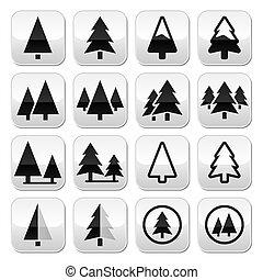 木, ボタン, セット, ベクトル, 松