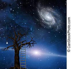 木, 知恵