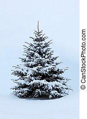 木, 雪, 松