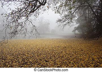 東, 朝, 秋, アーバ, 小さい, 霧が濃い