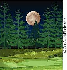 森林, 夜